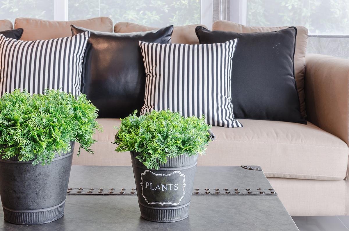 stratadata - Strata Living: 24 Suitable Indoor Plants