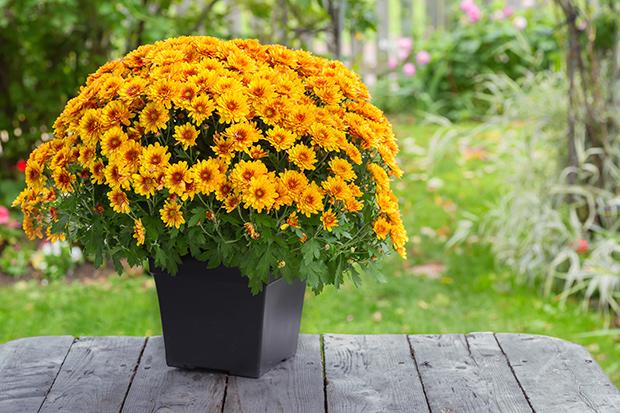 stratadata - Strata Living 24 Suitable Indoor Plants (11)