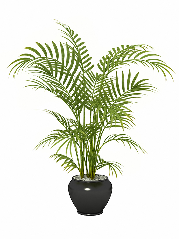 stratadata - Strata Living 24 Suitable Indoor Plants (14)