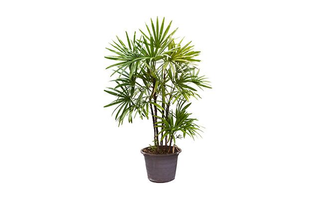 stratadata - Strata Living 24 Suitable Indoor Plants (15)