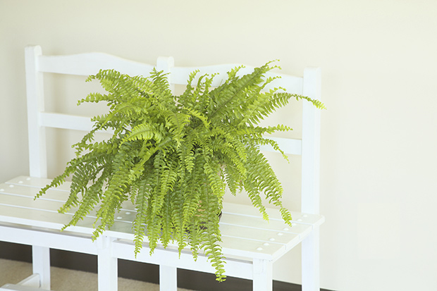 stratadata - Strata Living 24 Suitable Indoor Plants (7)